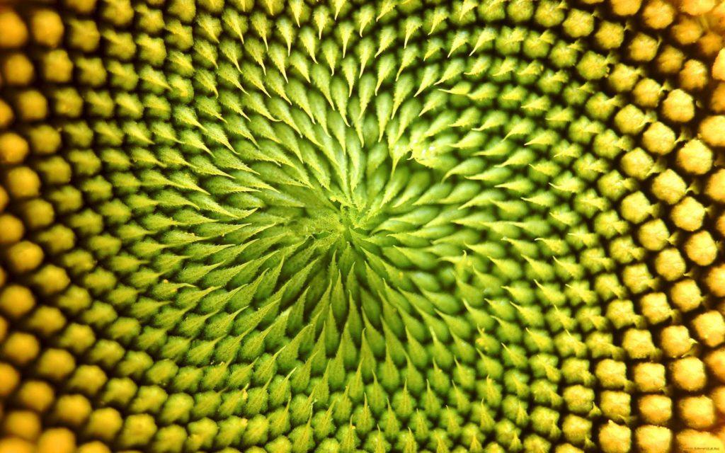 fleur macro cerveau mind map